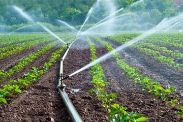 Isua Irrigation Scheme